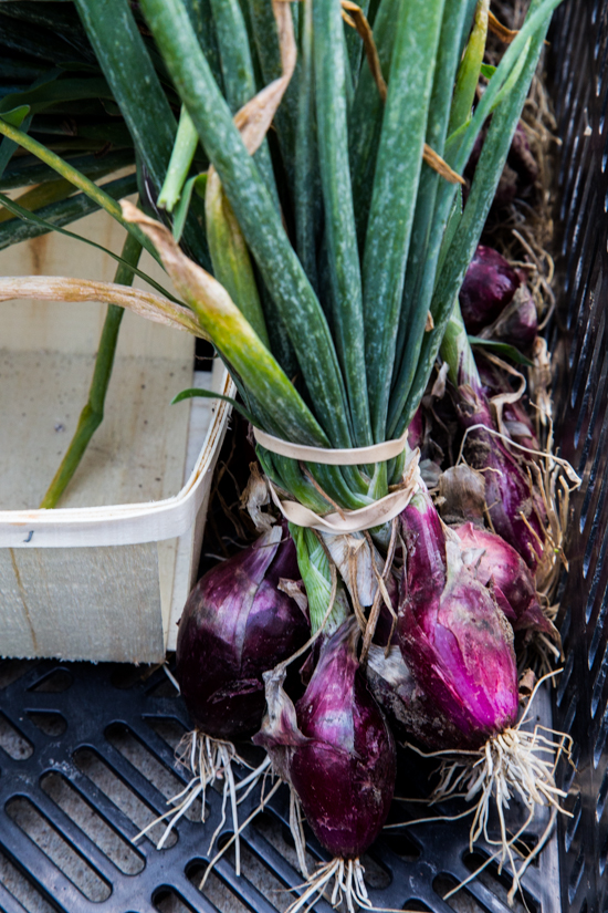 purple onions by Emily Caruso