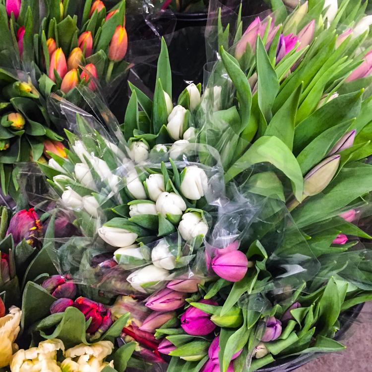 Tulips   JellyToastBlog.com